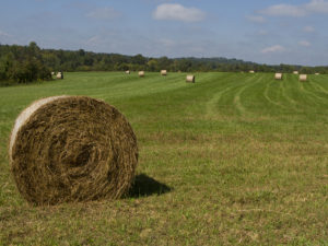 Chatham County hayfield.